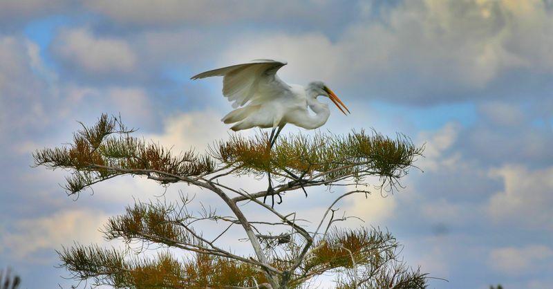 White crane for blog