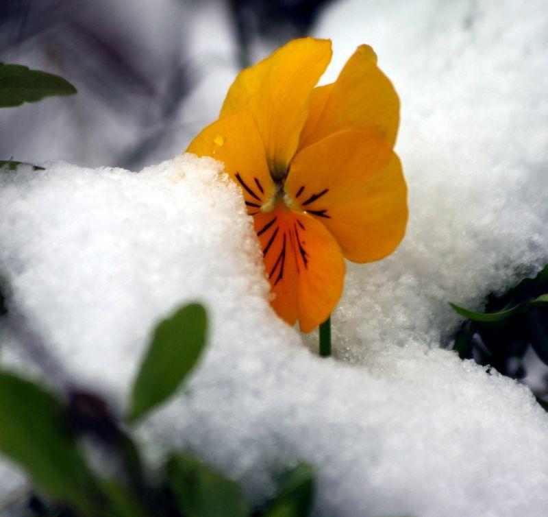 Winter fc december 038