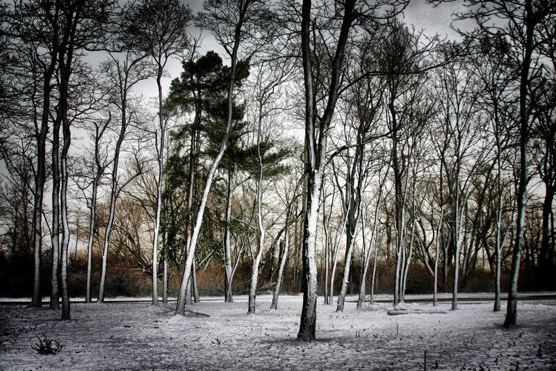 Winter Trees on Penninsula