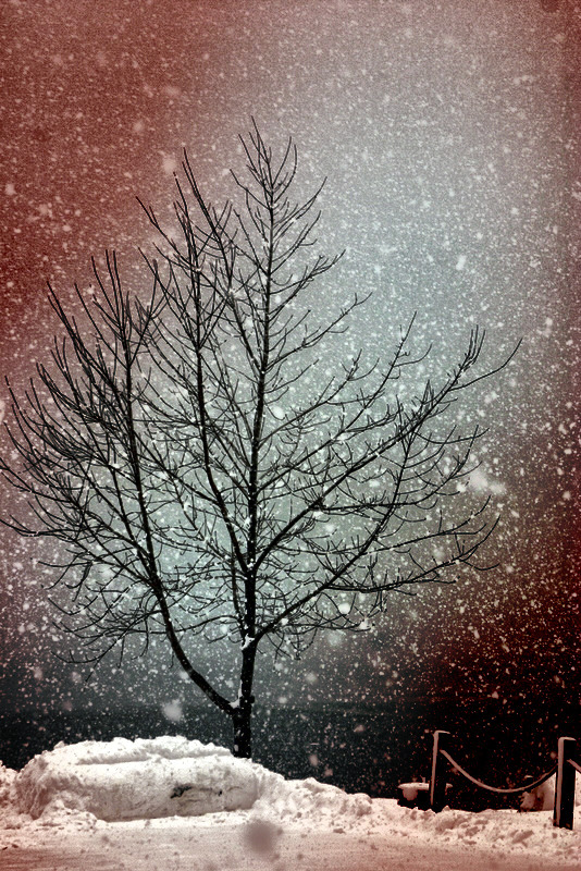 Snowstorm Tree