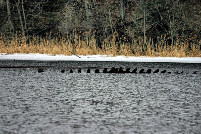 Ribs of boat