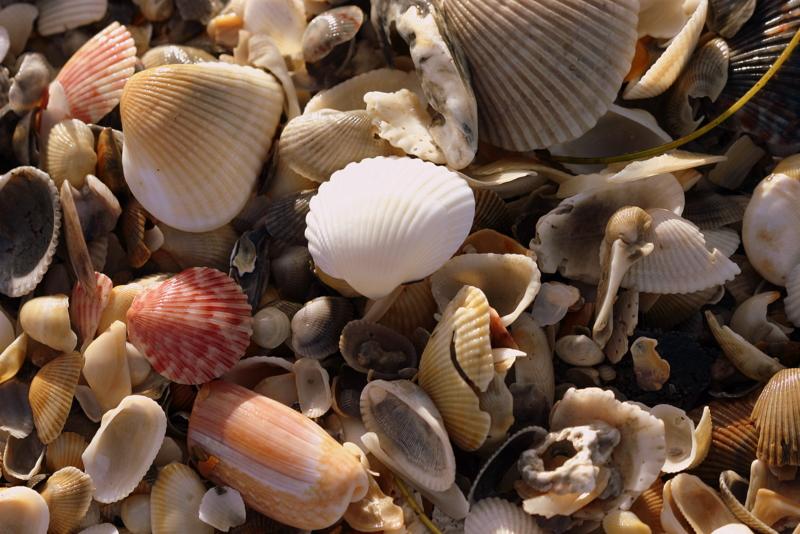 Seashells seashells
