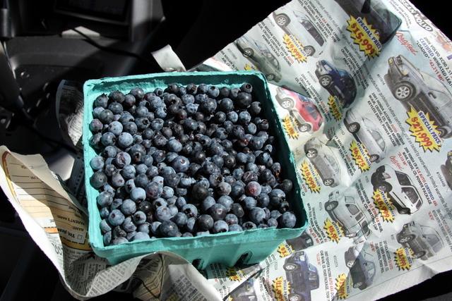 Blueberrys-1